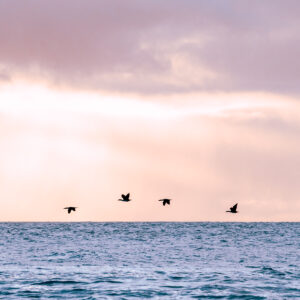 Birds Coming Home